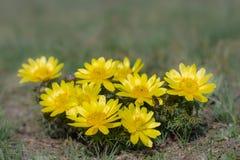 цветет весна лужка стоковое изображение rf
