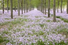 цветет весна пущи Стоковые Изображения