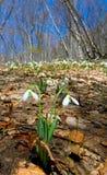 цветет весна пущи Стоковое Фото