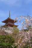 Цветет весна Сакуры Стоковые Изображения
