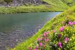 цветет гора озера около рододендрона Стоковое Изображение