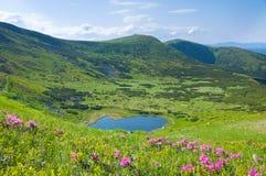 цветет гора озера около рододендрона Стоковые Фотографии RF