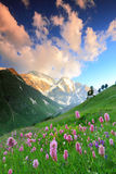 цветет гора Стоковые Фото