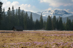 цветет гора Стоковое фото RF