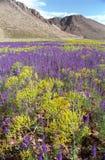 цветет гора стоковая фотография