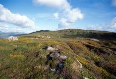 цветет горы Ирландии холма Стоковое фото RF
