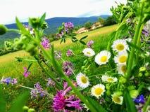 цветет горы стоковое изображение