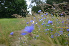 Цветет лес Стоковые Изображения