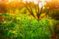 цветет лето лужка поле глубины отмелое Стоковое Изображение