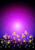 цветет желтый цвет ночи пурпуровый Стоковое Изображение RF