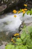 цветет желтый цвет реки Стоковые Изображения RF