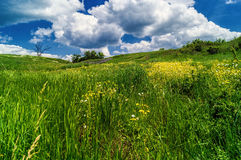 цветет желтый цвет зеленого цвета травы стоковые фото