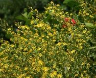 цветет желтый цвет лужка Стоковая Фотография RF