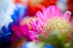 цветет живое Стоковое Фото