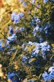 Цветет жизнь стоковая фотография