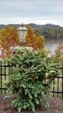 Цветет загородка фонарика лампы брюк реки деревьев дерева оранжевого желтого цвета Стоковые Изображения