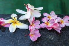 цветет заплывание бассеина frangipani Остров Бали Стоковые Фото