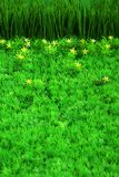 цветет зеленый цвет травы малый стоковые изображения