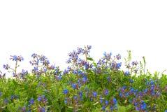 цветет зеленый цвет травы Стоковые Изображения RF