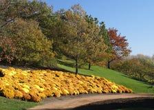 цветет золотистый горный склон Стоковые Изображения