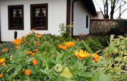 цветет золотистое Стоковая Фотография