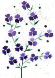 Цветет иллюстрация акварели, состав вектора стоковая фотография rf
