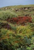 цветет Ирландия одичалая Стоковые Фото