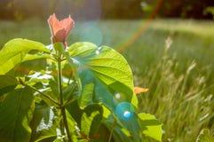 Цветет листва пика дерева Стоковые Изображения RF