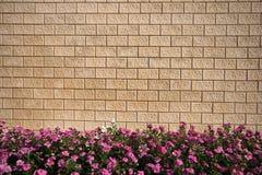 цветет каменная стена Стоковые Изображения