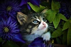 цветет котенок стоковое фото