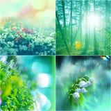 Цветет коллаж Стоковое фото RF