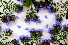 Цветет колоколы как рамка Стоковые Изображения