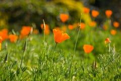 Цветет красивое Стоковая Фотография RF