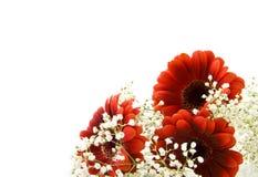 цветет красная белизна стоковая фотография