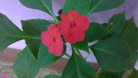 цветет красное малое Стоковое фото RF