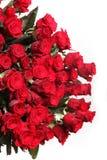 цветет красный цвет поднял Стоковая Фотография