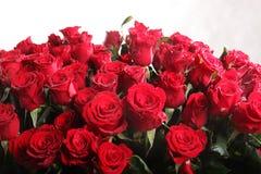 цветет красный цвет поднял Стоковые Изображения