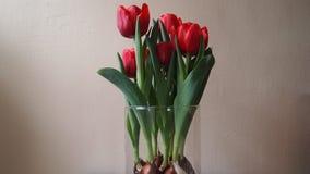 цветет красный цвет Стоковое Изображение RF