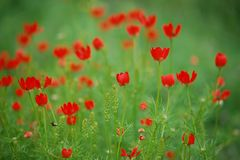 цветет красный цвет стоковые фото