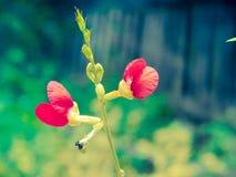 цветет красный цвет Стоковое Фото