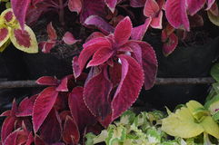цветет красный цвет Стоковая Фотография RF