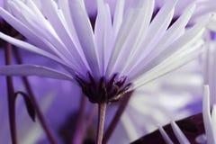 цветет лепестки стоковое фото