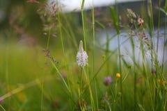 цветет лето лужка Стоковое Фото