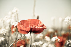 цветет лето лужка Стоковое Изображение