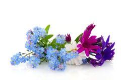 цветет лето Стоковое Фото