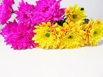 цветет лето стоковые изображения