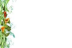 цветет лиана Стоковое Изображение