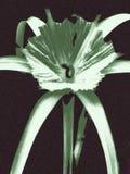 Цветет логотип Стоковое фото RF
