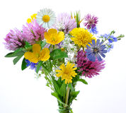цветет лужок стоковое фото rf