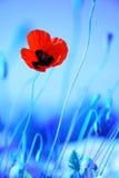 цветет мак лужка стоковое изображение rf